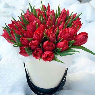 51 красный тюльпан в коробке