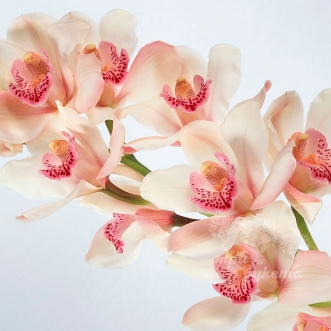 Ветка орхидеи