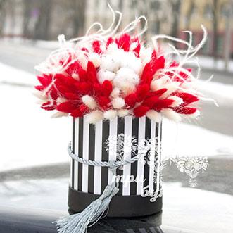 Красный и белый лагурус в коробке
